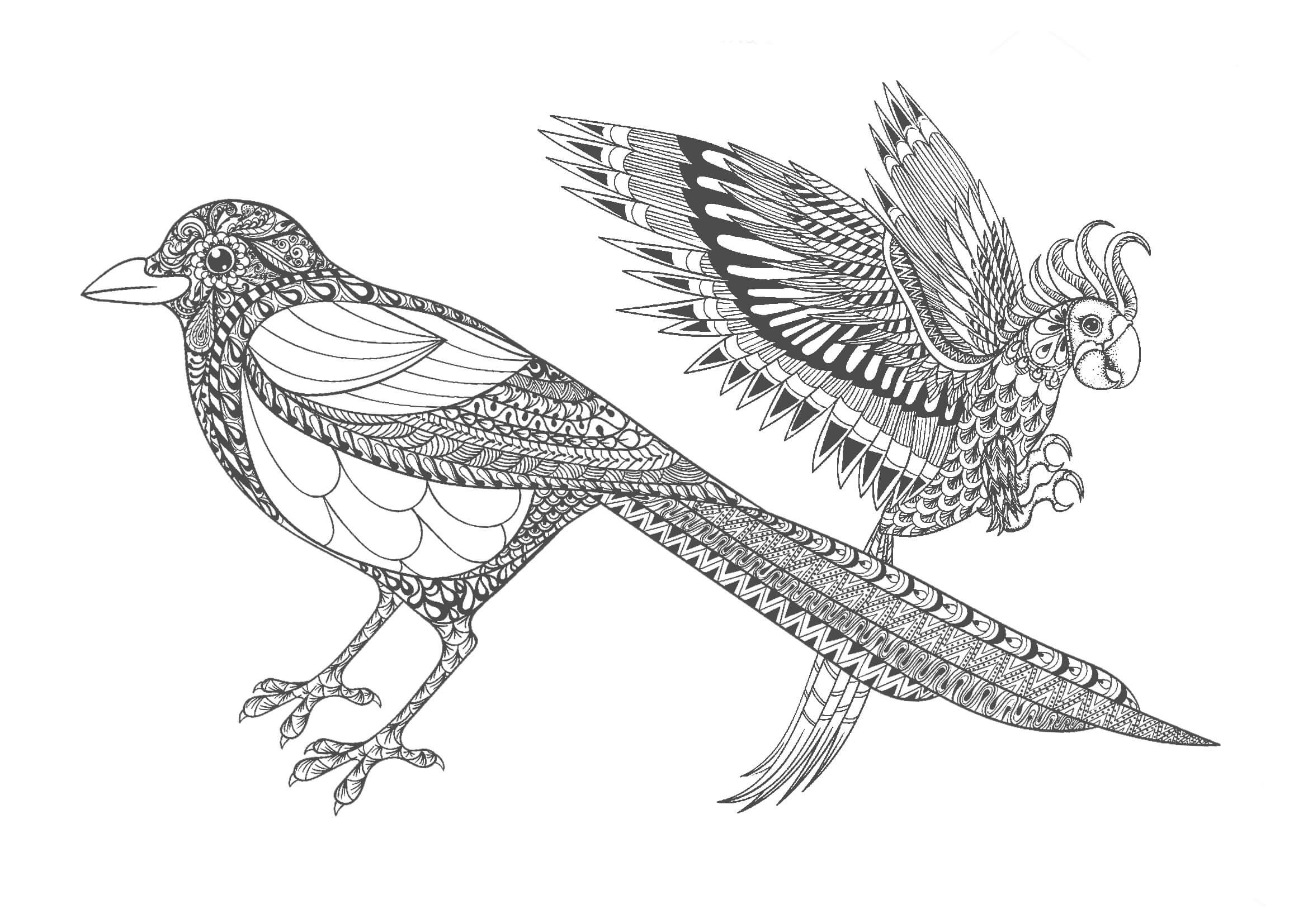 大人の塗り絵|鳥(無料印刷)
