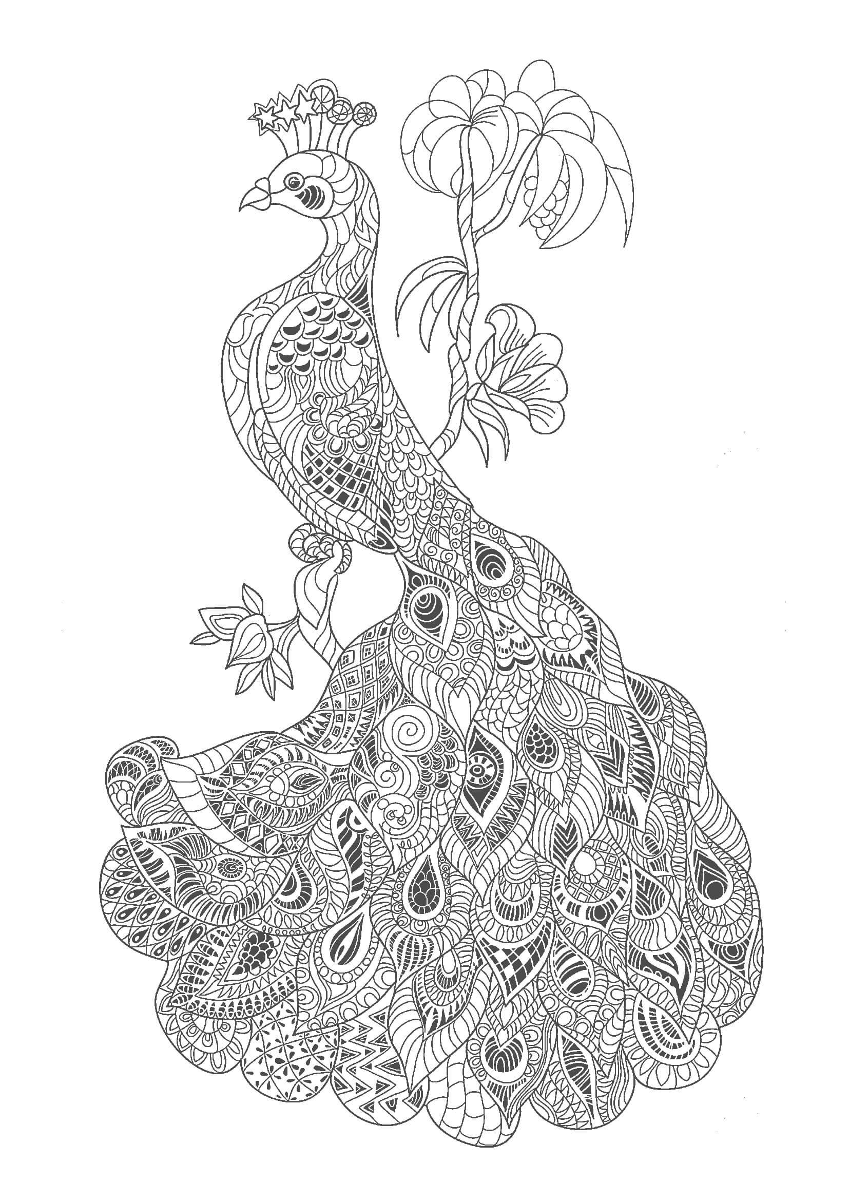 大人の塗り絵|鳥(無料印刷) | もくもくん|知育プリントキッズ