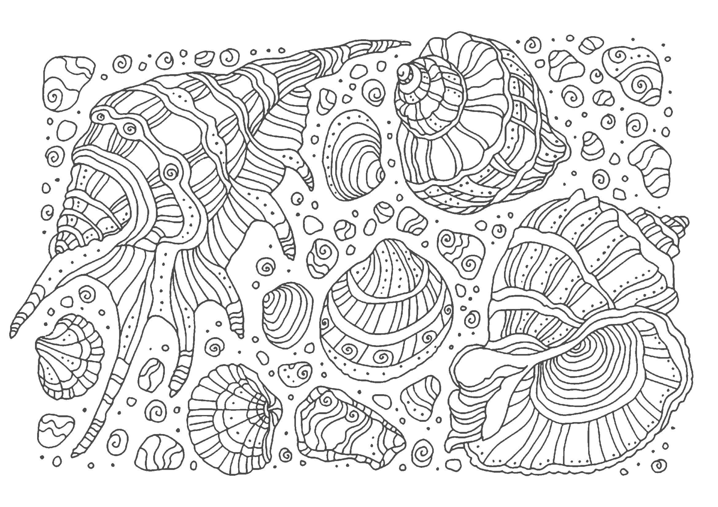 貝殻01,A4無料印刷の大人のぬりえ