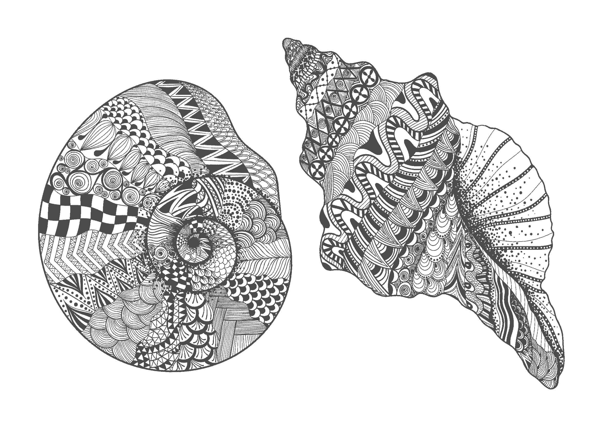 大人の塗り絵|貝殻(無料印刷)