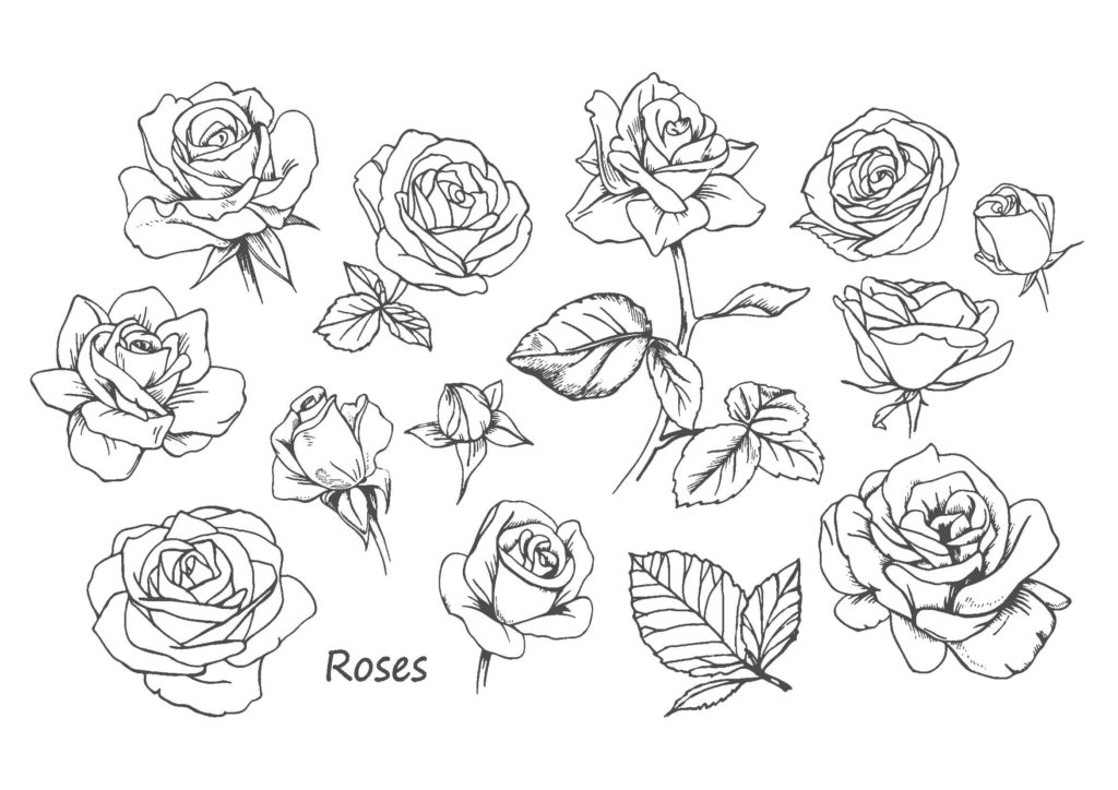 薔薇(バラ)04-A4無料印刷の大人のぬりえ