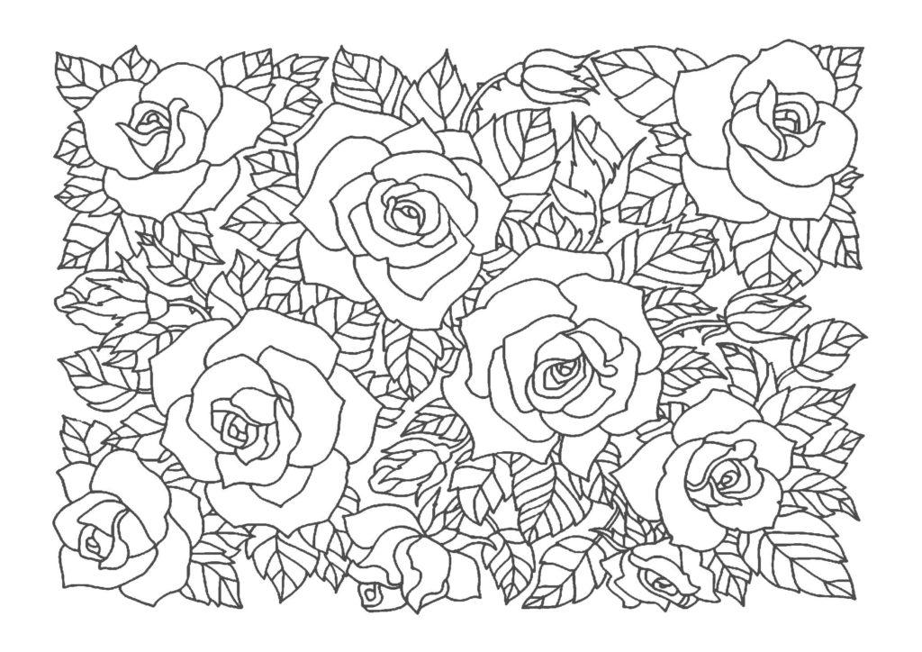 薔薇(バラ)03-A4無料印刷の大人のぬりえ