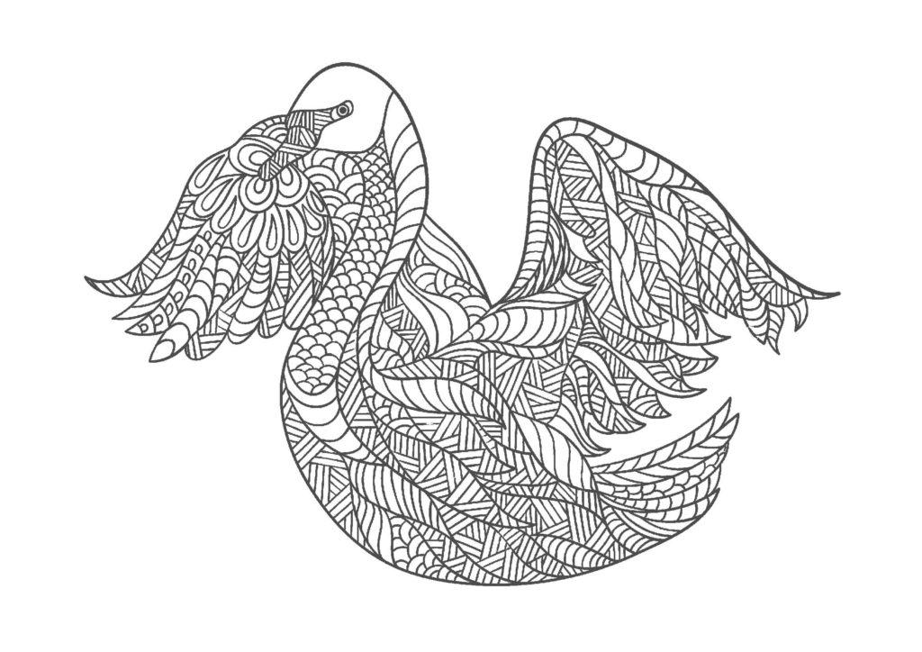 白鳥02-A4無料印刷の大人のぬりえ