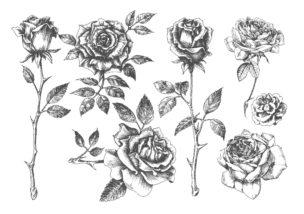 薔薇(バラ)02-A4無料印刷の大人のぬりえ