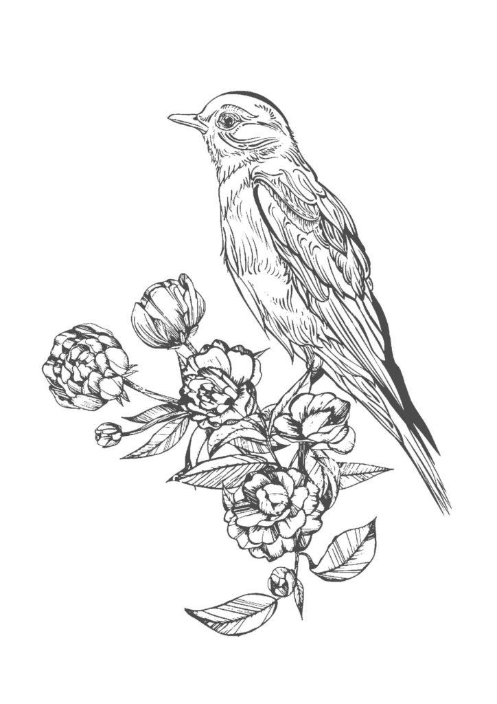 鳥と花02-A4無料印刷の大人の塗り絵