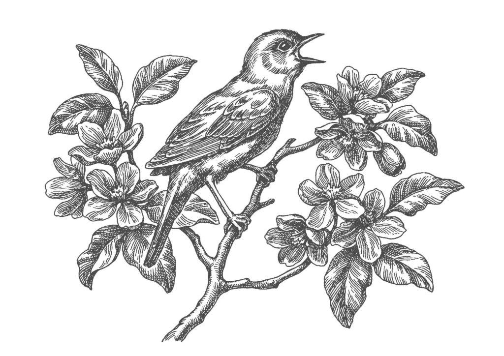 鳥と花03-A4無料印刷の大人のぬりえ