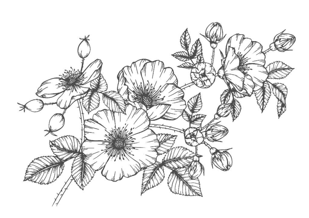 大人の塗り絵05-花vol.2