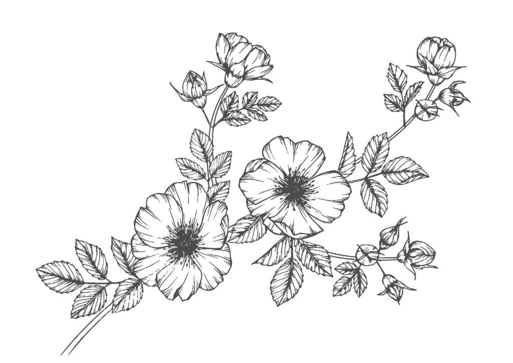 大人の塗り絵02-花vol.2