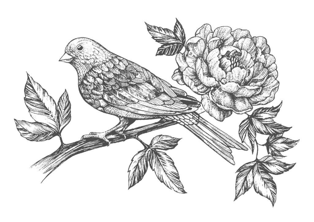 鳥と花02-A4無料印刷の大人のぬりえ