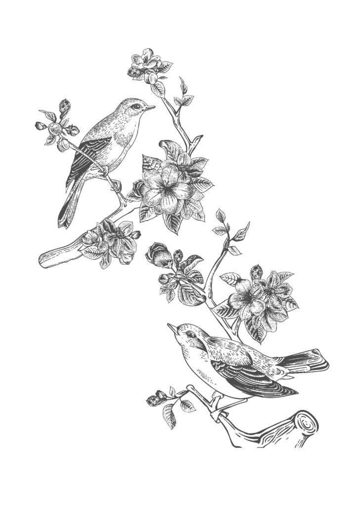 鳥と花03-A4無料印刷の大人の塗り絵
