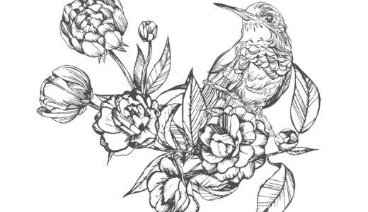 大人の塗り絵|鳥と花(無料印刷)