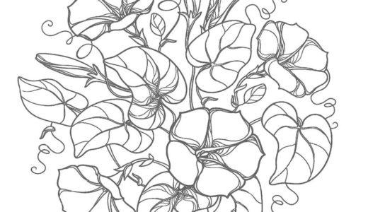 大人の塗り絵|朝顔の花