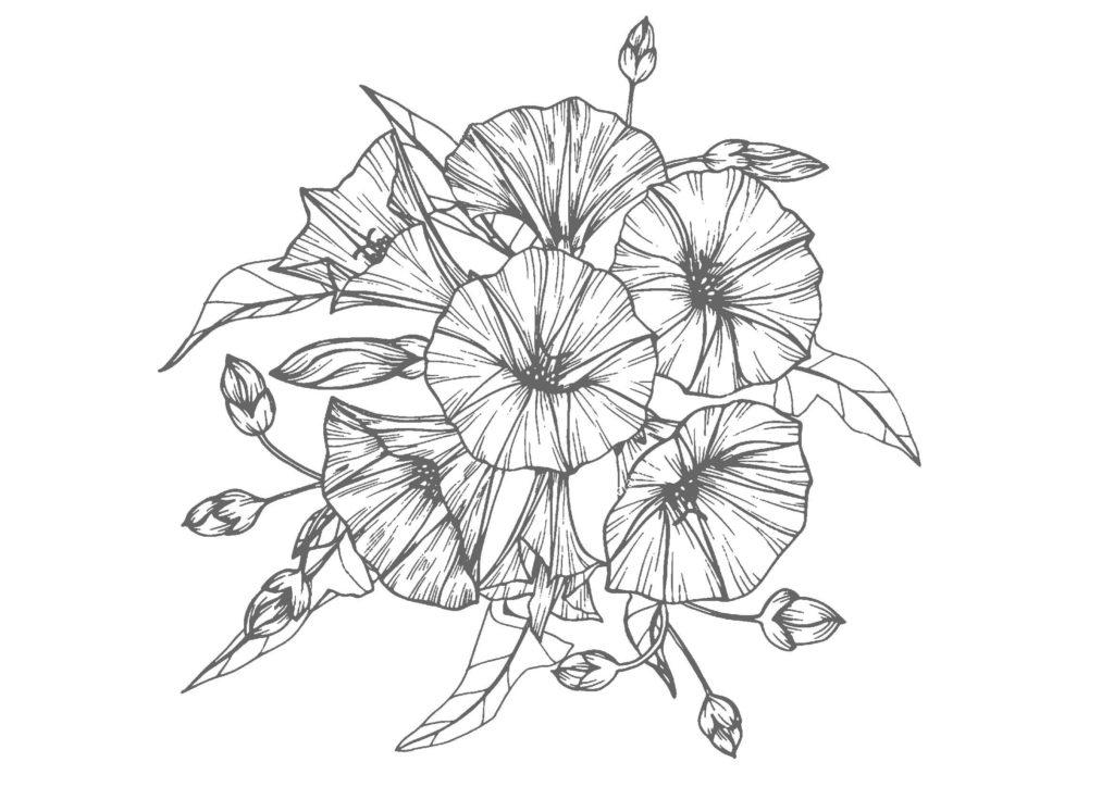 大人の塗り絵-朝顔04