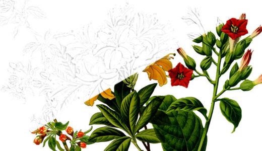 大人の描き塗り絵|花