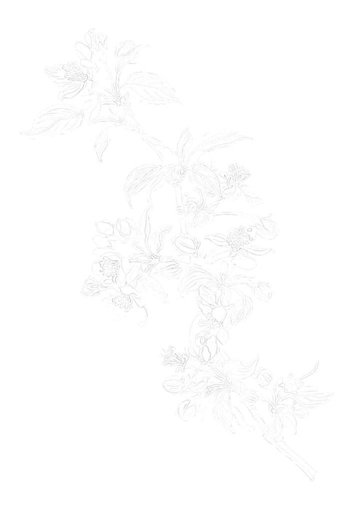 大人の描き塗り絵_花02